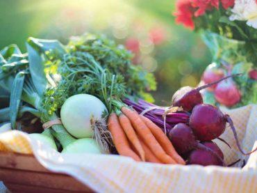 FoodTech-företag med fokus på vegetariskt och veganskt